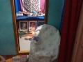 01-Aaradhana-ThoraChakram-Seethanagaram-18112019